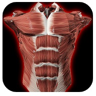 visual information - app anatomy